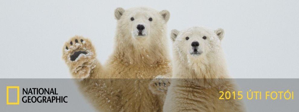 A National Geographic úti fotópályázat 2015 nyertesei és legjobb képei