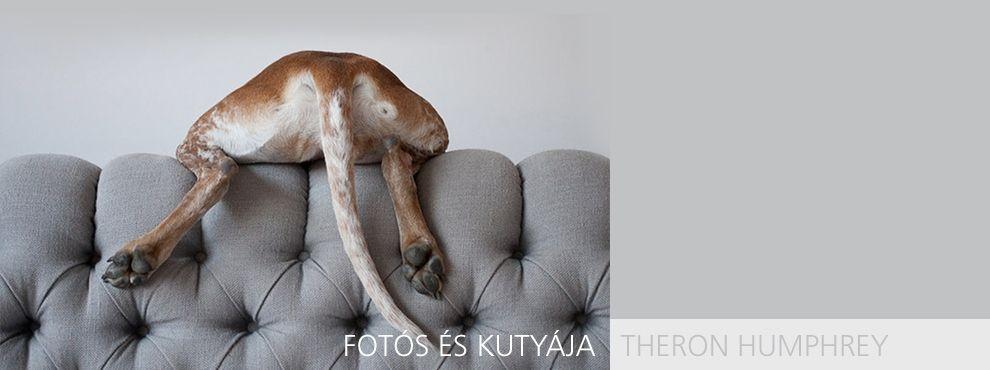 Fotós és kutyája - Theron Humphrey