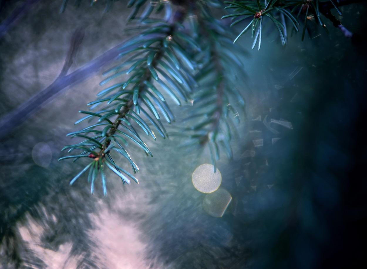 tamron sp 70-200mm f2.8 macro photo