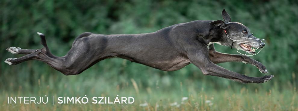 Interjú Simkó Szilárd kutyafotóssal!