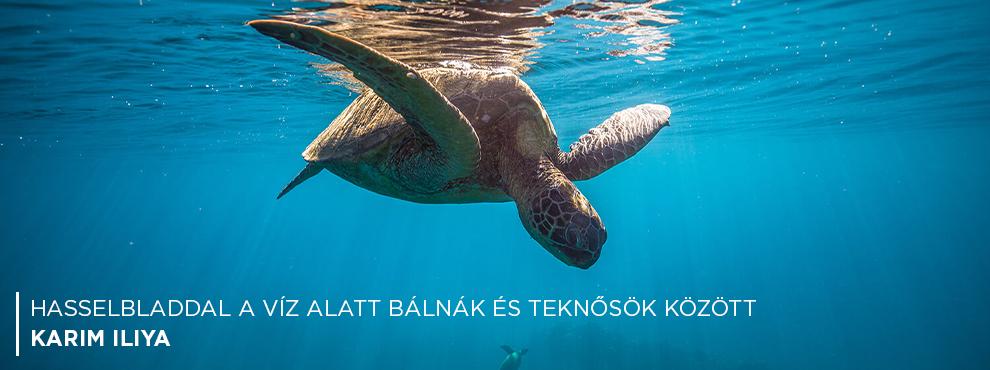 Hasselbladdal víz alatt bálnák és teknősök között